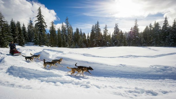 Things to Do in Whistler - Winter - Dogsledding